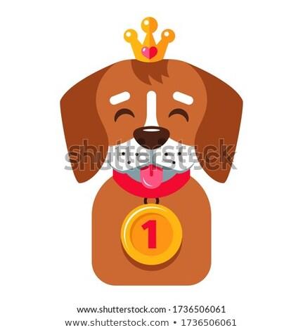 winner dog Stock photo © adrenalina