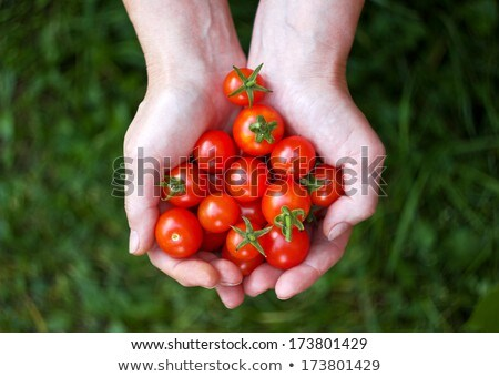 Woman hand with many vegetables Stock photo © balasoiu