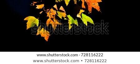 желтый осень дуб темно листьев Сток-фото © jeancliclac