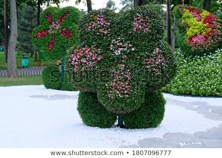 Stockfoto: Decoratief · vorm · planten · bloemen · Rood · geïsoleerd