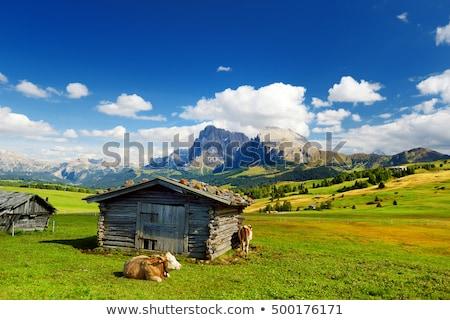 Seiser Alm, Dolomites. Stock photo © rudi1976
