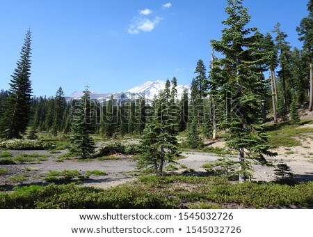 Mount Shasta, California Stock photo © AndreyKr