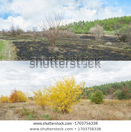 Fall colors after the fire Stock photo © wildnerdpix