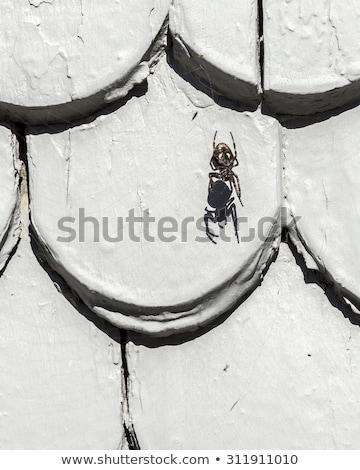 Vieux toit carrelage structure araignée ombre Photo stock © meinzahn