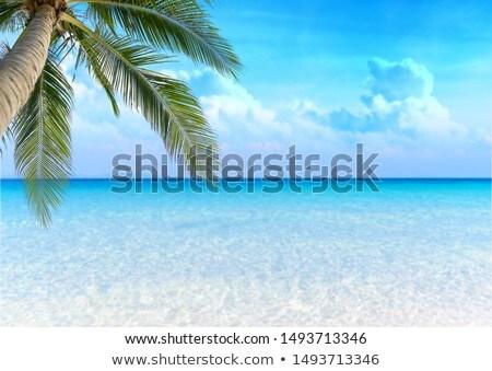 praia · tropical · brilhante · areia · azul · mar · verão - foto stock © karandaev