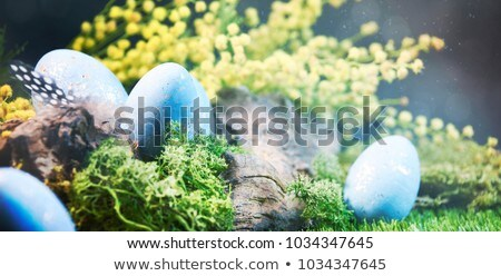 Páscoa branco pontilhado ovos ninho primavera Foto stock © dash