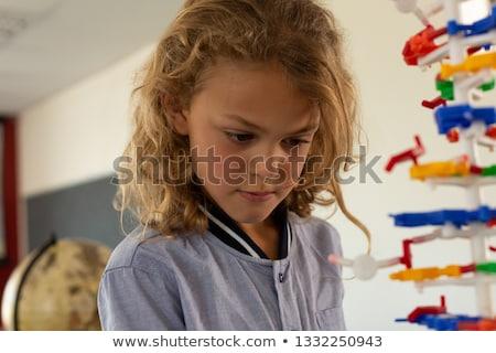 Aluna olhando dna modelo Foto stock © wavebreak_media