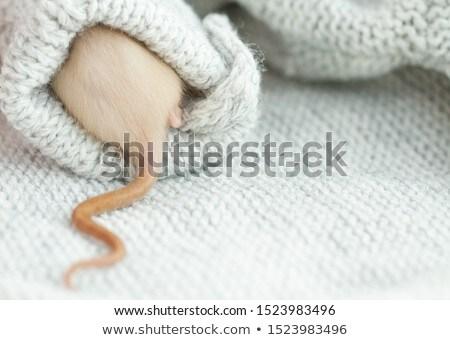 белый крыса иллюстрация дизайна мыши фон Сток-фото © bluering
