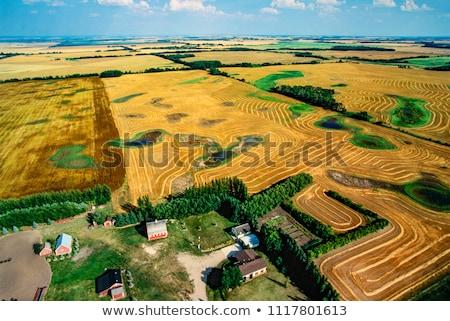 vidéki · Saskatchewan · nyár · termés · Kanada · égbolt - stock fotó © pictureguy