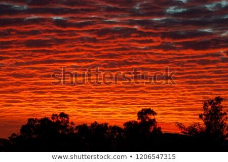 Australian outback sunset Stock photo © sumners