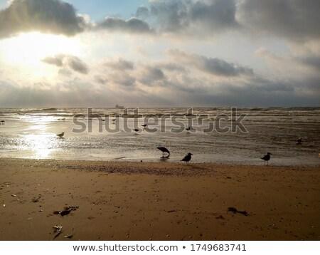 Pôr do sol vermelho lago praia céu paisagem Foto stock © samsem
