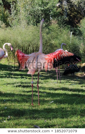 red flamingo flower in white back stock photo © gewoldi