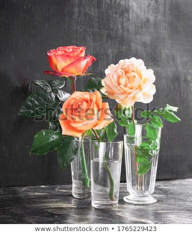 rózsa · színes · virág · tavasz · természet · kert - stock fotó © olandsfokus