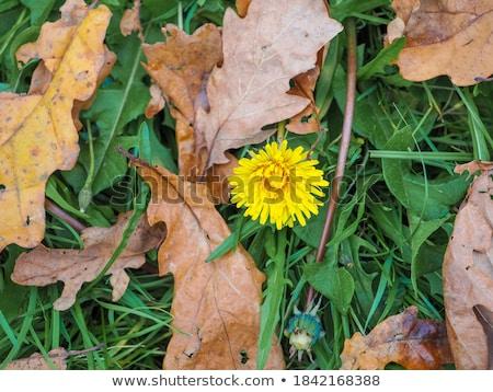 Lonely autumn tree Stock photo © mady70