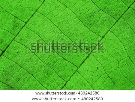 устрашающий зеленые листья дизайна дерево лес лист Сток-фото © SArts