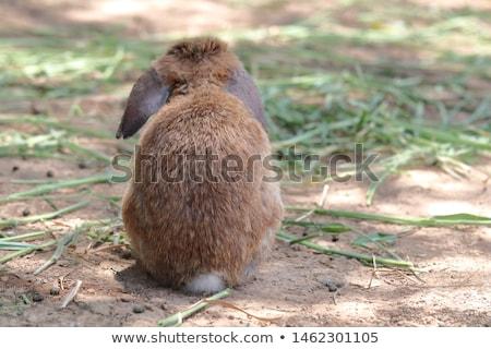 Depresso piccolo coniglio cartoon illustrazione guardando Foto d'archivio © cthoman