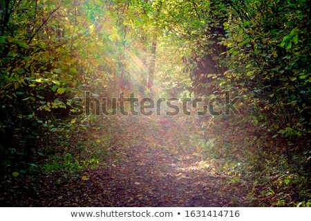 An Old Forest Bathed in Bright Light Stock photo © rognar