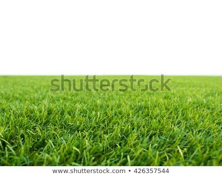 hierba · hierba · verde · luz · del · sol · brillante · primavera - foto stock © mtkang