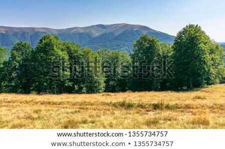Carpathian deciduous forest Stock photo © hraska