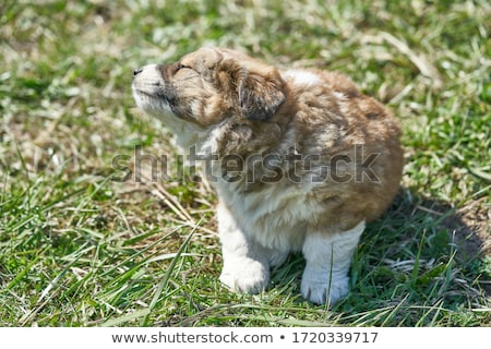 Stock photo: puppy