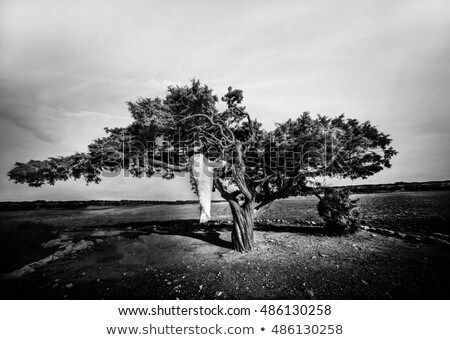 romantyczny · kobieta · zielone · sukienka · biały - zdjęcia stock © dashapetrenko