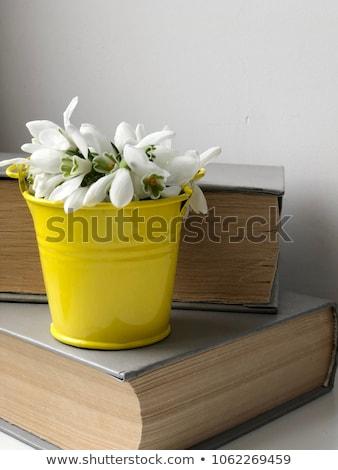 весны · изолированный · белый · цветок · зима · голову - Сток-фото © mady70
