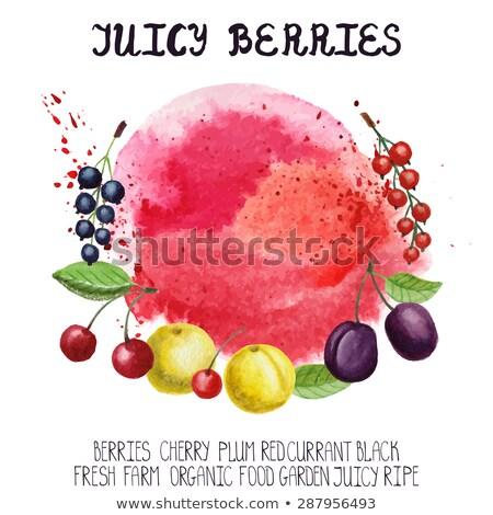 ベクトル 赤 ジュース 斑 白 水 ストックフォト © butenkow
