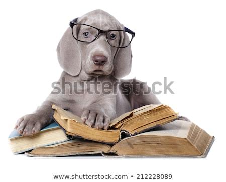 Cute cachorro pie blanco ojo Foto stock © vauvau