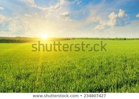 Autumn rural field and cloudy blue sky, nature background Stock photo © Anneleven