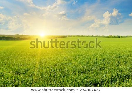 autunno · rurale · campo · nuvoloso · cielo · blu · natura - foto d'archivio © Anneleven