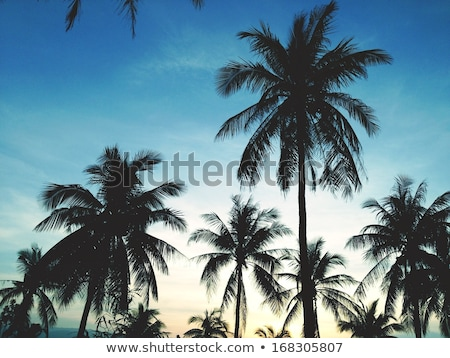 Palm Tree on the Beach. Mediterranean Sea on the Background. Stock photo © ShustrikS