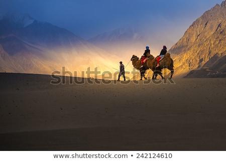 Himalaia pôr do sol vale Índia camelo caravana Foto stock © dmitry_rukhlenko