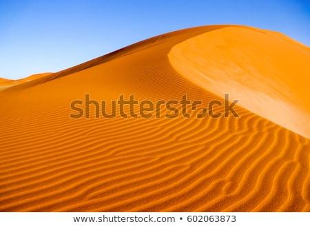 Sand dunes in desert Stock photo © dmitry_rukhlenko