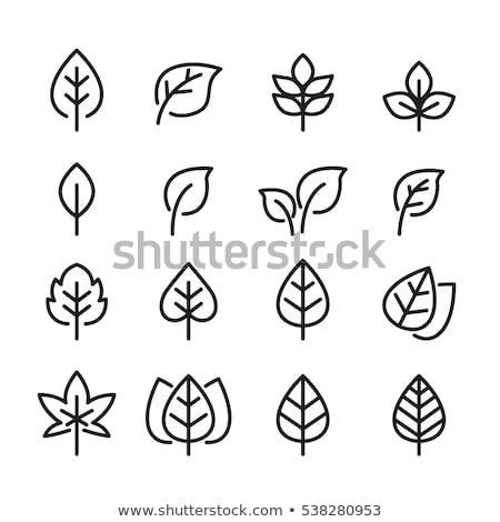 листьев иконки изолированный белый трава аннотация Сток-фото © cidepix