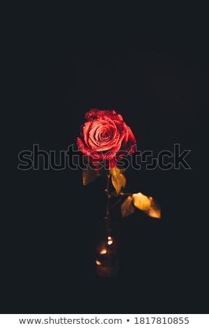 Primo piano bella rosa gocciolina anniversario cartolina Foto d'archivio © bogumil