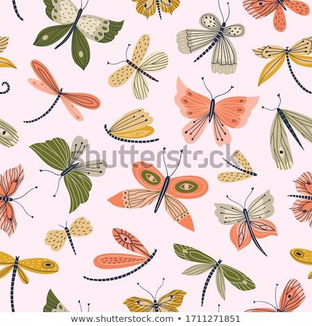 Dragonfly саду зеленый природы красивой насекомое Сток-фото © sweetcrisis
