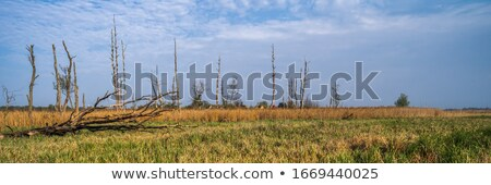 A dead tree in a beautiful meadow Stock photo © Beaust