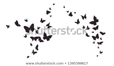 セット · 飛行 · 蝶 · シルエット · 孤立した · ベクトル - ストックフォト © jul-ja