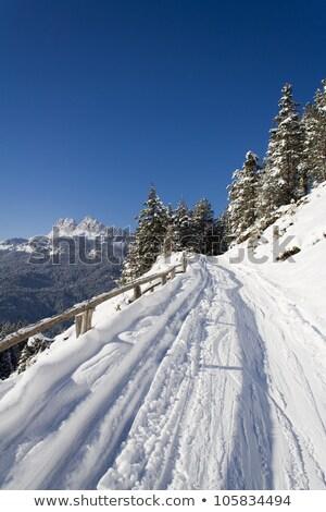 тропе снега горные зима животные лыжных Сток-фото © Armisael