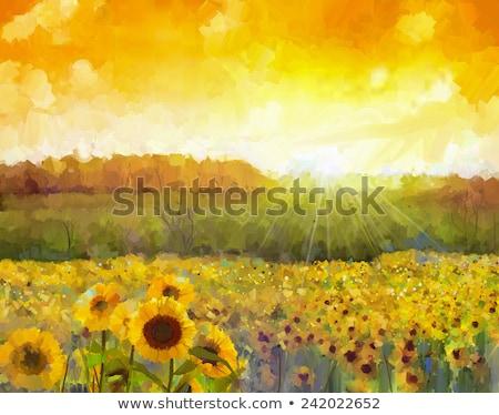 Kép arany ültetvény napraforgók csodálatos mező Stock fotó © lypnyk2