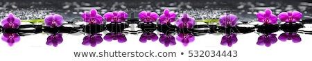 stones with orchid flower  Stock photo © Masha