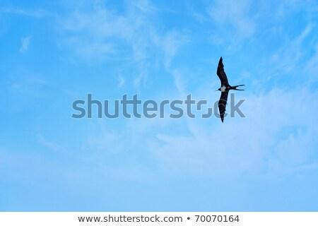 sziluett · repülés · fölött · víz · öböl · tenger - stock fotó © sarahdoow