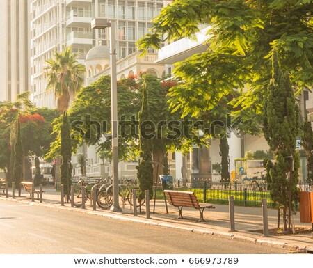 florescimento · árvore · rua · bicicleta · flor - foto stock © eldadcarin