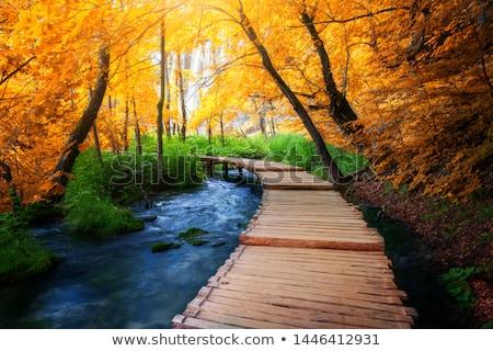 Boardwalk into the wilderness Stock photo © wildnerdpix