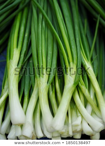 spring onion in garden stock photo © stevanovicigor