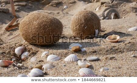 Deniz yosunu kahverengi top plaj kumu doku arka plan Stok fotoğraf © lunamarina
