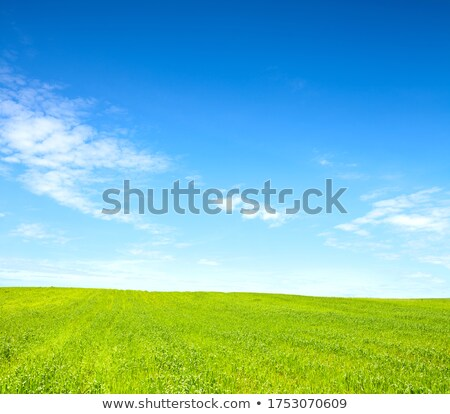 blue skies green filed Stock photo © chesterf