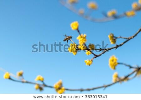 arı · kovan · oturma · petek · adam · çerçeve - stok fotoğraf © thomaseder