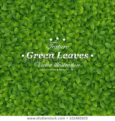 バイオ 緑色の葉 自然 葉 緑 文字 ストックフォト © rioillustrator