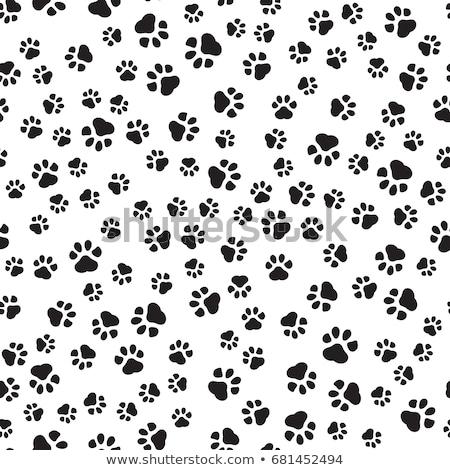 Absztrakt színes mancs kutya terv felirat Stock fotó © burakowski